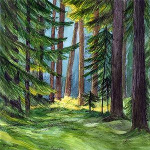 Varjuline metsaalune, taamal paistab soe päikeselaik. Maria Välja akvarellmaal tindijoonistusega.