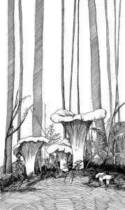 Kõrgete puude all on kukeseened. Maria Välja mustvalge tindijoonistus.